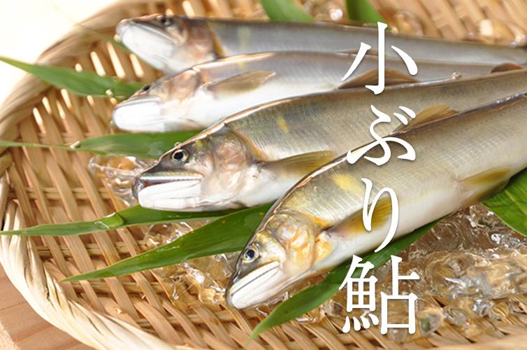 四万十 天然鮎 鮎 冷凍 500g 川の幸 天ぷら 調理 レシピ付