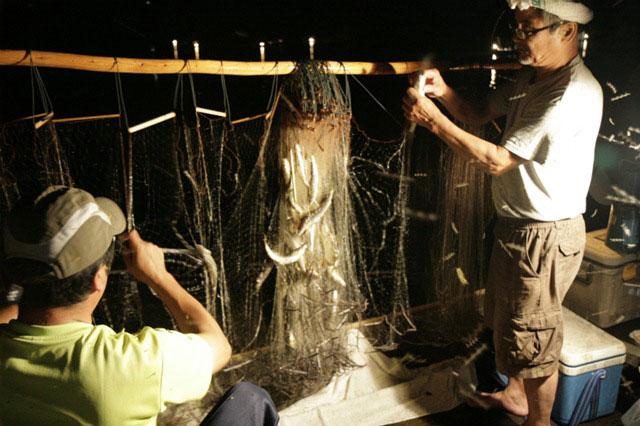 鮎伝統の火振り漁