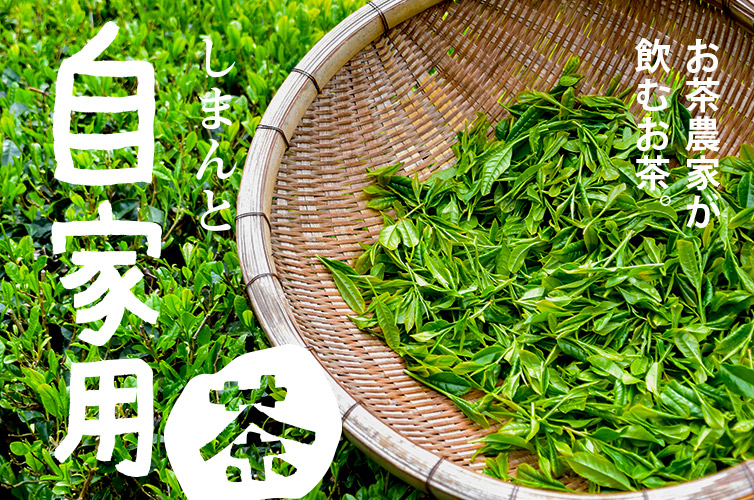 しまんと自家用茶 刈番茶 茶葉 ちゃっぱ 手刈り 四万十 しまんと茶 農家 家茶