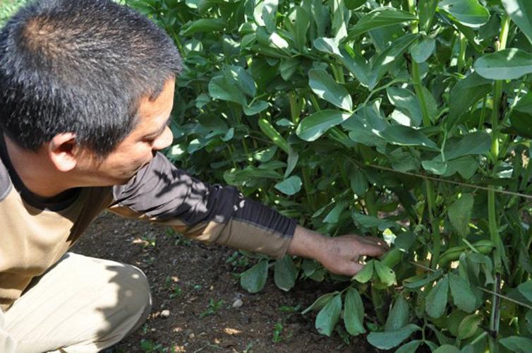 無農薬、無化学肥料の野菜づくり