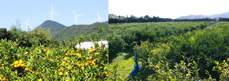 畑の写真2枚