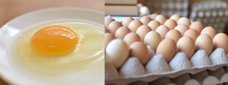 生卵 鶏舎の土佐ジロー