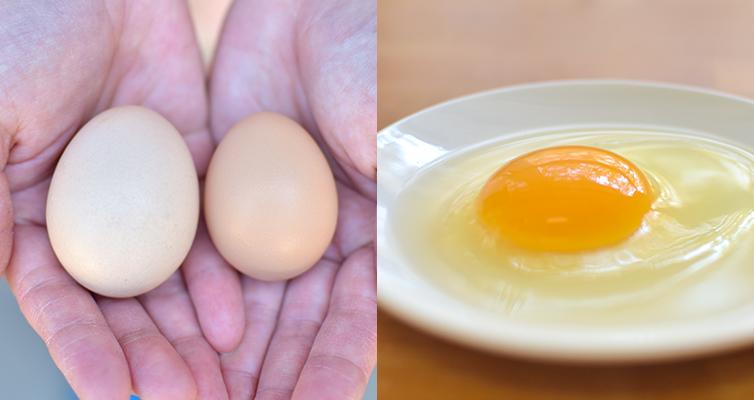 土佐ジローの卵 卵 10個 土佐ジロー 自然 いちえん農場