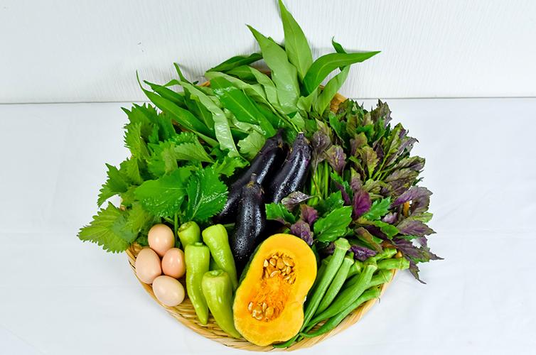 しまんと流域農業 無農薬 化学肥料不使用 オーガニック 土佐ジロー 濃厚たまご 卵 野菜