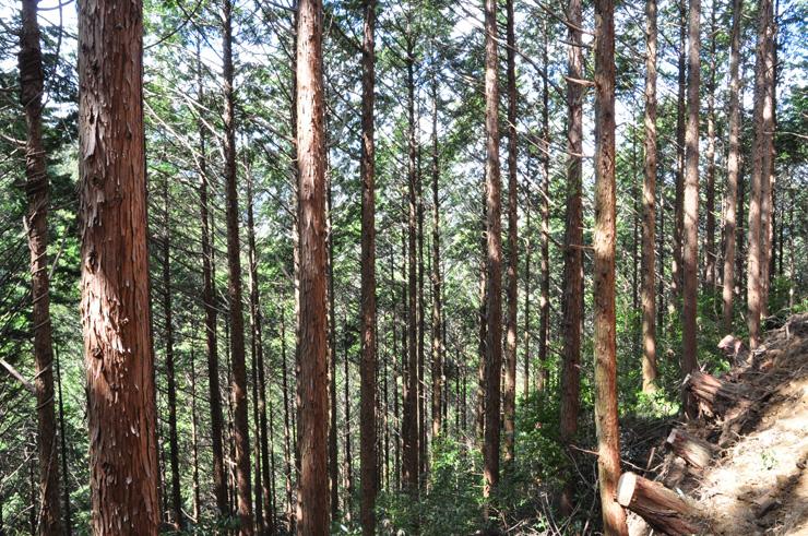 高知県の森林