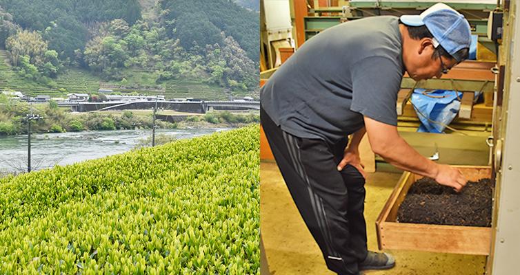 アールグレイ earlgrey ベルガモット bergamot 四万十町 広井茶 国産 和紅茶 茶畑 生産者